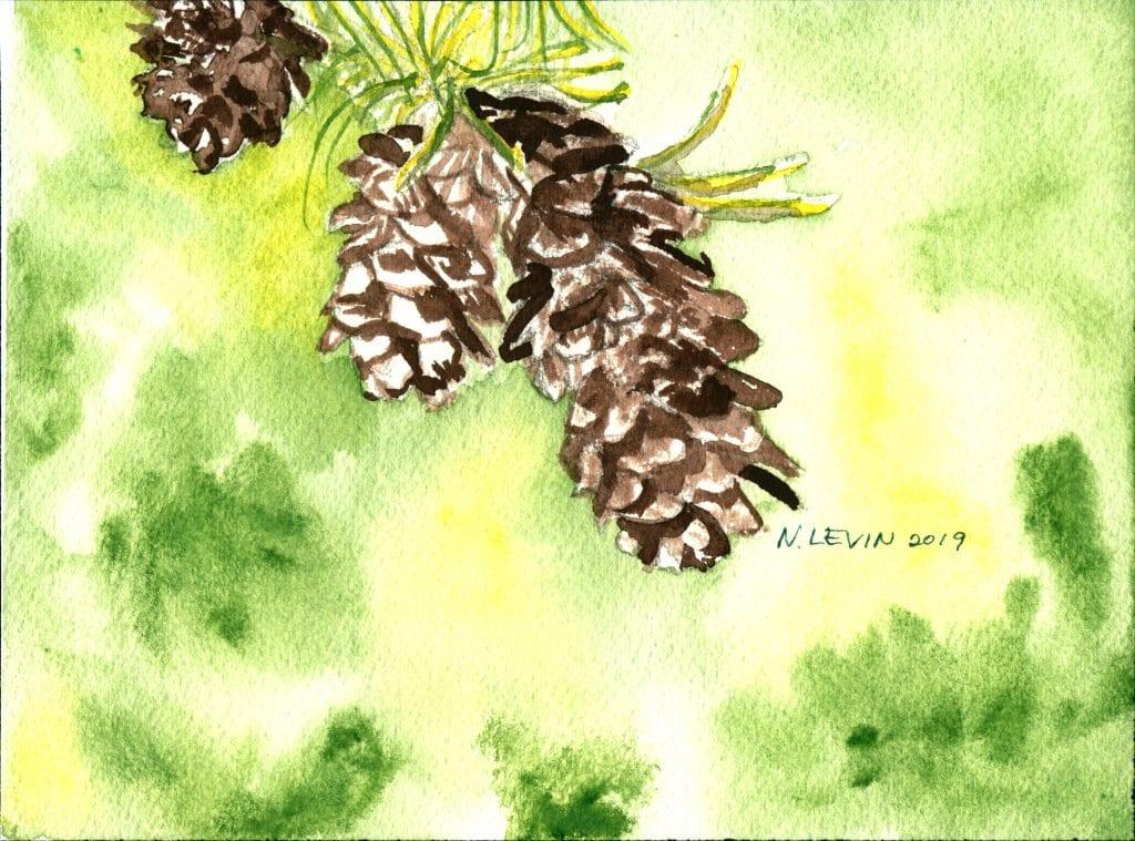 Pine cones on Wordsmith of Roanoke